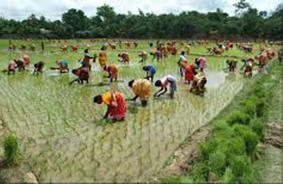 women working in Bangladesh